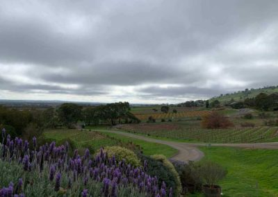 Some of the natural beauty which makes the Grandeur limos tour of wineries in the Barossa Valley enchanting